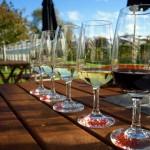 Artisan wines, wine testing