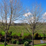 West Brook winery, vineyard